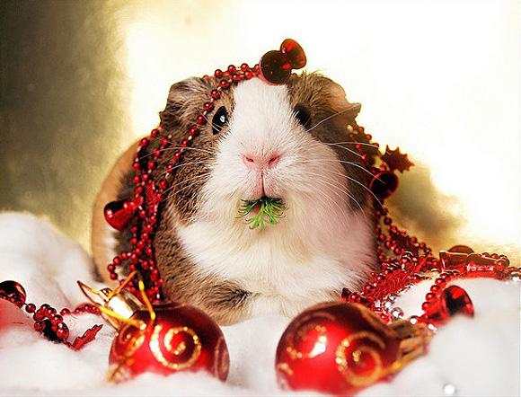 christmas animals animal life disqus