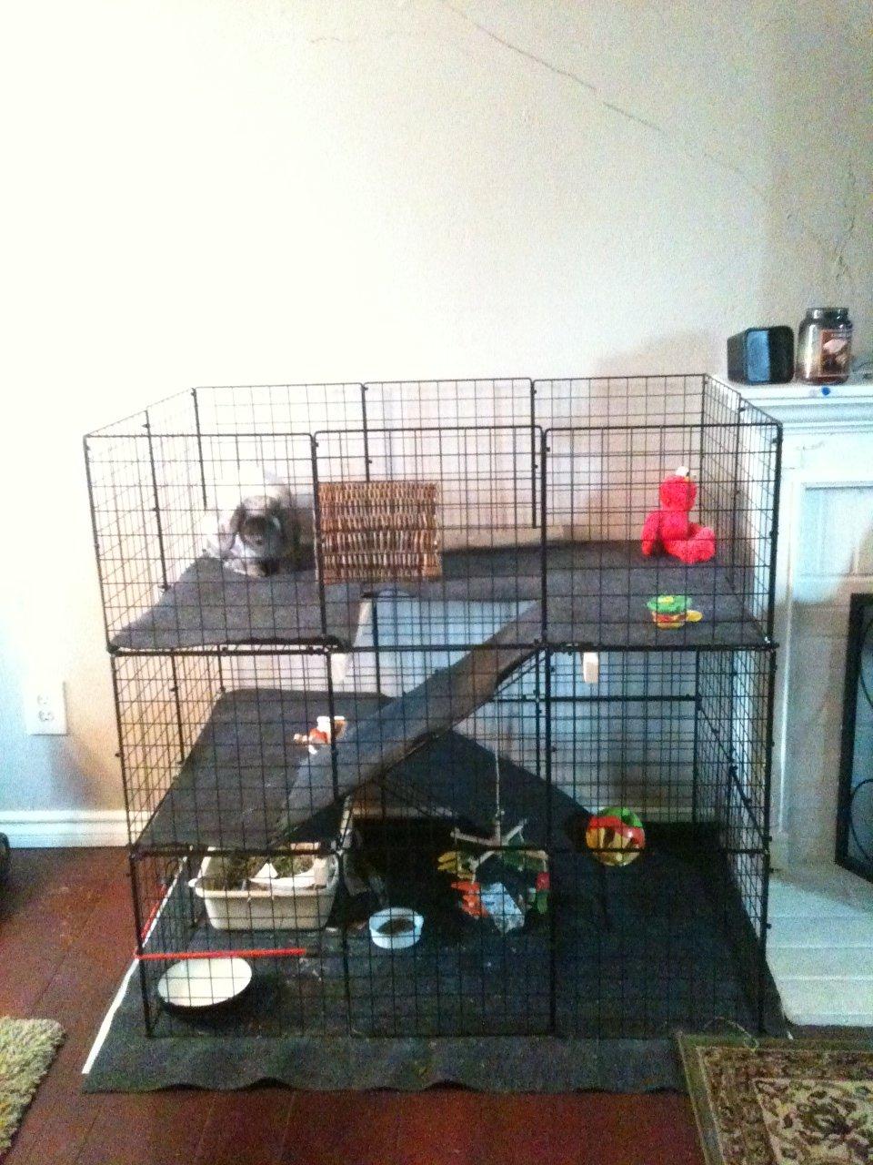 Cavy condo 4 guinea pig cage photos click for How to build a guinea pig house