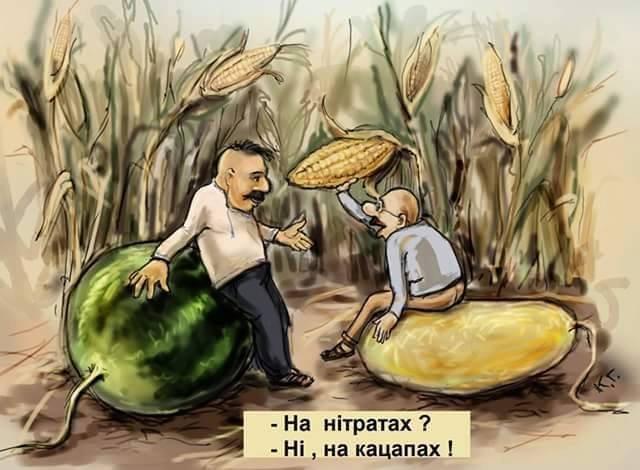"""Возле населенного пункта Счастье """"Фантом"""" задержал несколько грузовиков с семенами подсолнечника на миллион гривен - Цензор.НЕТ 5660"""