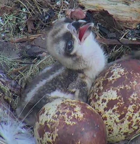 Wildtier-Livecams - Seite 27 Original