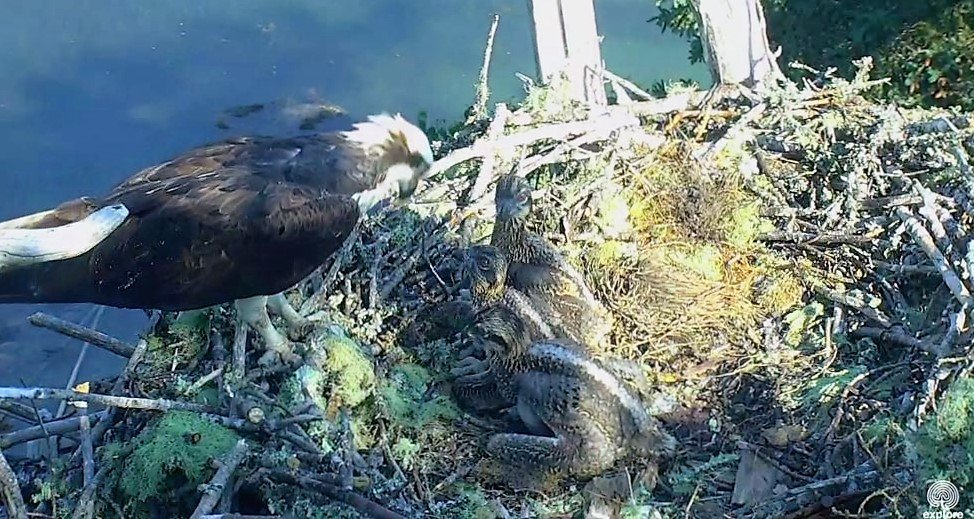 Wildtier-Livecams - Seite 28 Original