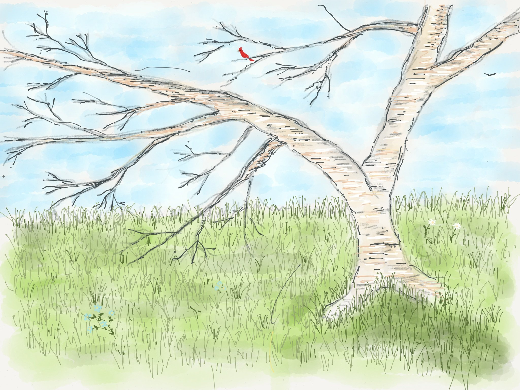 Paper for iOS tree drawing